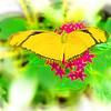 airbrush-orange-julia-bflyh-DSC09669