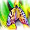 airbrush-paperkite-bfly-stlz-DSC09317