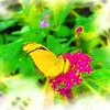 airbrush-orange-julia-bflyh-DSC09668