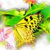 airbrush-paperkite-bfly-stlz-DSC09274
