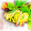 airbrush-paperkite-bfly-stlz-DSC09287
