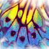 airbrush-paperkite-bflyh-DSC09856