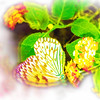 airbrush-paperkite-bfly-stlz-DSC09288
