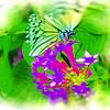 airbrush-paperkite-bflyh-DSC00033