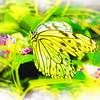 airbrush-paperkite-bfly-stlz-DSC09281