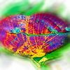 airbrush-indian-leaf-bflyh-DSC09830