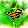 airbrush-orange-tiger-bflyh-DSC00093