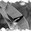 fr-bw-shoemaker-DSC09752