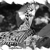 fr-bw-paperkite-bfly-stlz-DSC09290