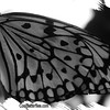 fr-bw-paperkite-bfly-stlz-DSC09371