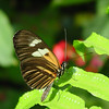 doris-longwing-DSC00117