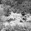 Black and White photos of Lilacs by Deborah Carney.--highland-pk-DSC08932