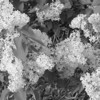 Black and White photos of Lilacs by Deborah Carney.--DSC08685