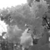 Black and White photos of Lilacs by Deborah Carney.--krassavica-moskvy-DSC08927