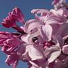 serene-DSC01518 Lilac photos by Deborah Carney