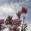 oblata-DSC03061 Lilac photos by Deborah Carney