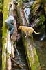 Hiking Club, Horseshoe Creek Fun with Xingu the dog, who would go anywhere Vik leads.