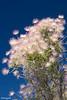 Las Vegas desert spring flower