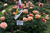 06-14-09:  Taken yesterday during my visit to the Portland Rose Garden.  The sign tells all.  -Deb