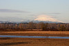Mt St Helens taken from Sauvie Island