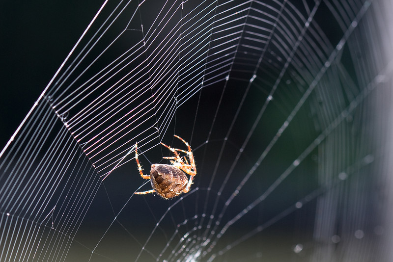 Spinning a web<br /> I watched this Orb spider make a new web this morning. I shot about 100 pictures, 70% had to be thrown out because of a slight breeze adding another challenge.  I liked this shot the best even though it is the back side of the spider.  In this case, it is where the action is.  :-)<br /> Thanks for looking.<br /> ~Deb<br /> 10/5/09