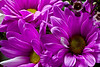 Happy Flowers<br /> I had the tripod and camera set up to take pictures of a bouquet.  Dennis grabbed the camera and took a better photo of the flowers.  So I'm posting his.<br /> <br /> Deb<br /> 2/14/2010