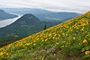 Dog Mountain<br /> One of my favorite hikes in May, hiking to the top of Dog Mountain when the arrow leaf balsam root is in full bloom.<br /> ~Deb<br /> 5/30/2010