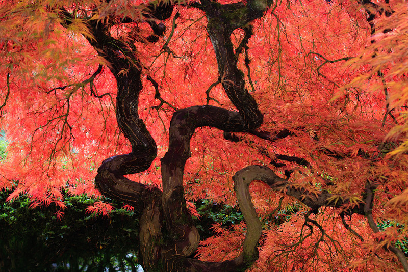Fall in the Japanese Garden<br /> <br /> I know this is the typical shot, but I just could not resist.<br /> Deb<br /> 11/6/2011
