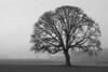 Oak Tree out in Mollala Oregon