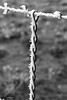 Freezing Fog on Barbed Wire Fence