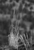 Fall grass taken at Cove Pallisades State Park