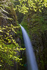 Dry Creek Falls<br /> Led a hike up to this lovely waterfall near the Bridge of the Gods in Washington<br /> Enjoy <br /> Deb<br /> 5/21/2012