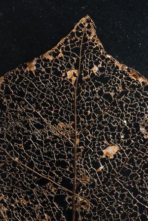Decayed Magnolia Leaf 2.9.18