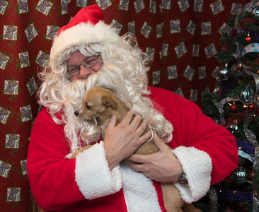 121916  Wesley Bunnell | Staff  The New Britain Animal Control Facility hosted pet photos with Santa on Monday evening. Honey, a chihuahua and terrier mix who is up for adoption through the facility, makes Santa Claus laugh as he holds her for a photo.