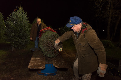 120516 Wesley Bunnell | Staff  Kiwanis Club members in Berlin are holding a Christmas Tree and wreath sale off of Massino Drive. Kiwanis members Art Palmunen , shown left, along with Morgan Seelye prepare a tree to take home for Edward Arroyo of New Britain.