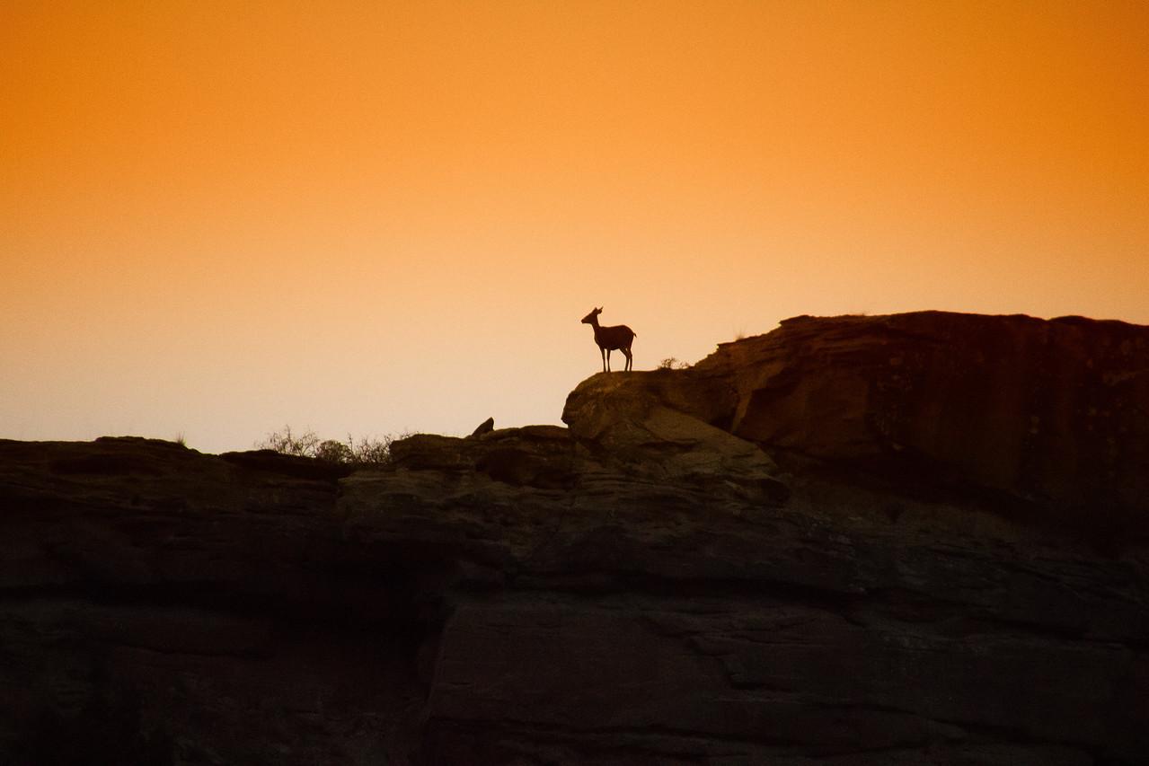 Deer on Palo Duro Rim