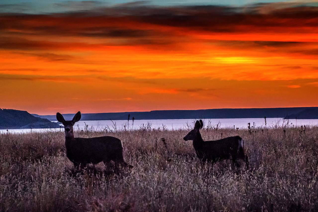 Deer Sunset, Lake Meredith