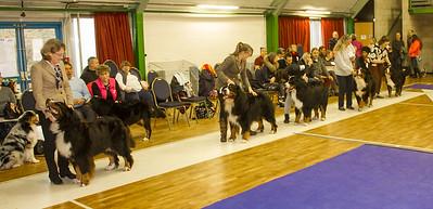 Best Dog Line up-9646