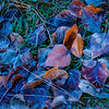 Icy Leaves at Cooks Meadow