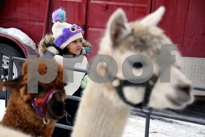 "12/16/2017 Mike Orazzi | Staff Samiah Baiz-Byrd,5, looks at Llamas during the petting zoo at Rockwell Park Saturday for Bristol's ""Santa Land Village."""