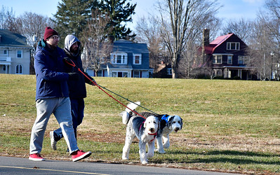 12/12/2018 Mike Orazzi | Staff Brothers Greg and Jacek Trelski walk 10 month-old Sheepadoodles Calder and Lucky while in Walnut Hill Park in New Britain Wednesday afternoon.