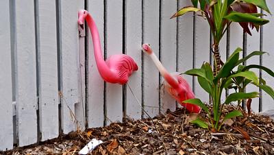Legless Flamingos. Early Morning.