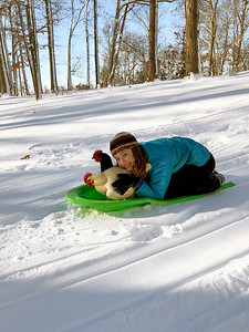 Emily Greuel sledding with her chickens just north of Effingham in the Green Creek area. Submitted by Karan Greuel