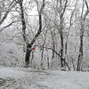 Feb. 26, 2020 snow pic