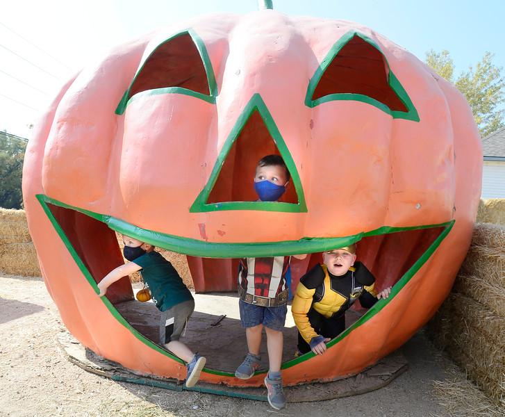 Rocky Mountain Pumpkin Ranch