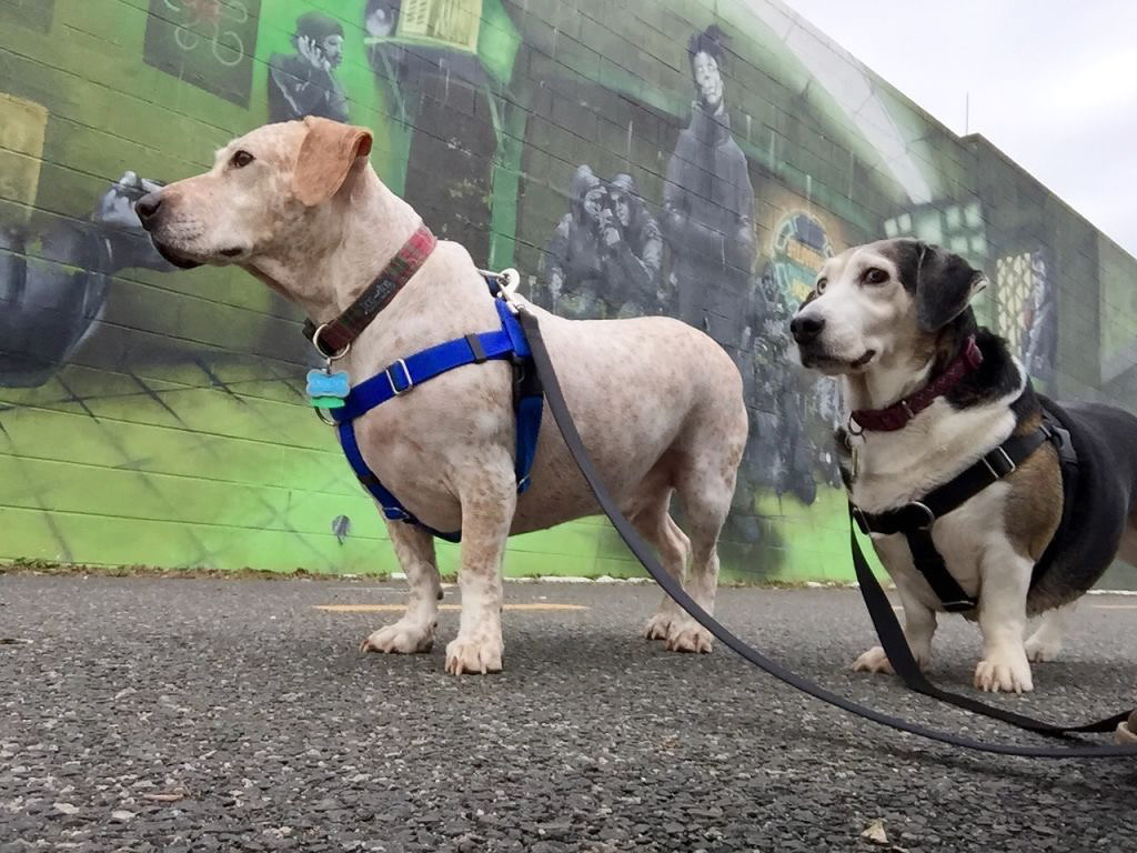 Our urbane DC grand-dogs, Disco and Paige, enjoying some public art.<br /> <br /> (Photo: Thomas)