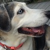 And here are our Silver Spring granddogs, Paige...<br /> <br /> Photo: Thomas