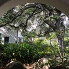 So, that's how the family is doing.<br /> <br /> Here's how 2017 unspooled for us. We spent the month of February in Santa Barbara, where Eliot has longstanding colleagues at UCSB. This is the garden of the Santa Barbara Museum of Natural History, a paradise of earthly delights.
