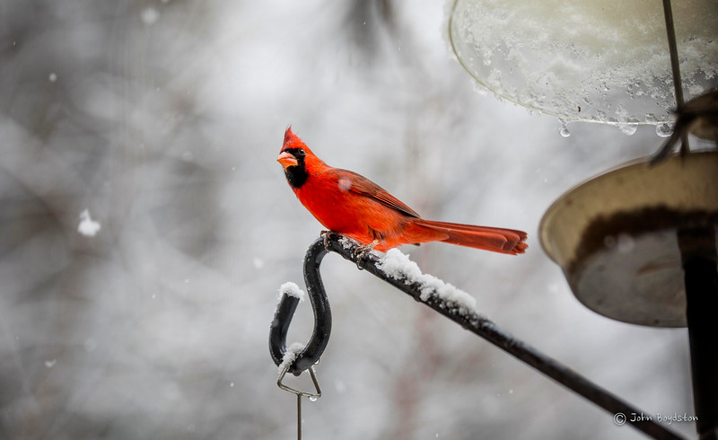 December Snow Day Birds
