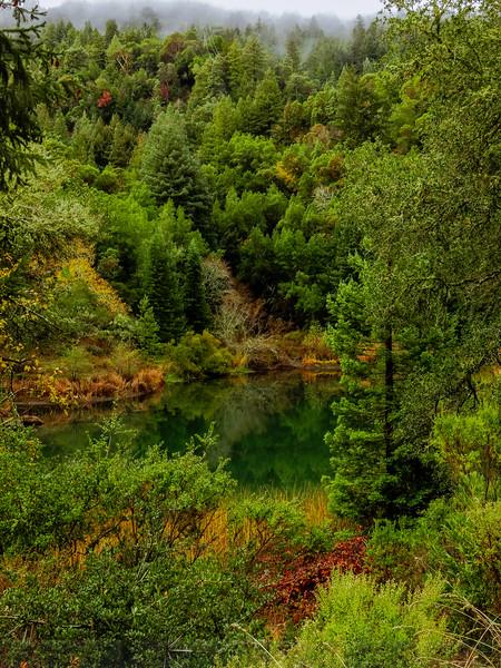 Phoenix Lake: Scene of Green